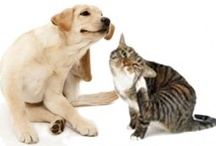 Pet Health Articles / Blogs from our Favorite Brands and misc. articles we think are of value