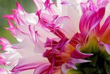 Flowers, flowers / Everything cut flowers and flowering plants, plus flower arranging.