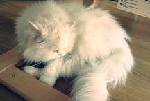 My cat Miskin