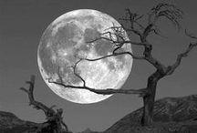 La Luna / by Elisandra