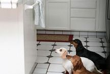 More ANIMAL Love / doggie, bird, cat, horse, tortoise love