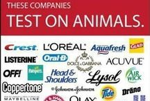 Cruelty Free Products / Many of the well known brands we use for everyday things are brands that test on animals or belong to companies that test on animals.  This is a list of cruelty free options for those items.  Note:  Essential oils are dangerous for pets, so be careful! / by Oddment