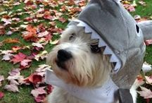 NBD's 2013 Pet Costume Contest / Submit a picture for your chance to win! Copy this link & paste into your browser for the rules http://bit.ly/16qBwkD / by NoBetterDeal