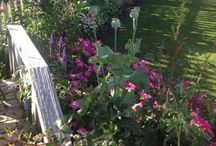 Cottage gardens / by My Shabby Chic Pink Palace ~