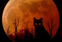 All Hallow's Eve  / by Penny Wofford Lambert (Miss Penny Whistle Creations)
