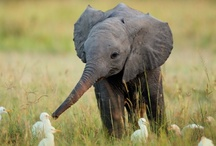 All Things Elephant
