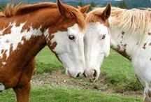 animals :: horses / horses / by Peggy
