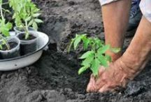 Sustainable Agriculture / Growing food, preserving the plant.  http://foodshuttle.org/we-teach/agriculture-training-programs/