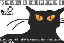 Black Cat Crush <3 / by Penny Wofford Lambert (Miss Penny Whistle Creations)
