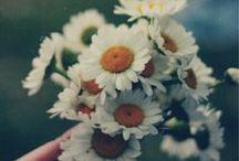flower p o w e r / by Josefina Polanco