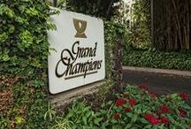 WAILEA GRAND CHAMPIONS / Wailea Grand Champions Condos For Rent-Golf & tennis players Maui dream Property come true! The condos are affordable Wailea luxury rentals nestled in a tropically lush garden setting with ocean views!