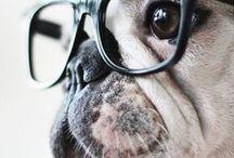Pugs to Love