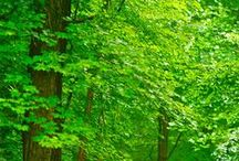 Breathe / Beautiful images of Oxygen-creating, Shade-providing, Serenity-inducing TREES. / by Linda McHardy
