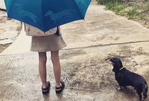 Dachshund / I have grown up with dachshunds all my life. My brother currently has a wire haired, my mother and Aunt share a brace of golden long haired, my son has Banger, a short haired. I am just waiting for Mash. / by India Hicks