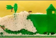 Ant Farms / View the secret subterranean world of the ant!