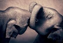 Elephants / ziloņi