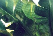 Palms / by India Hicks