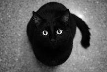 kittykats