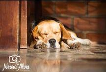 Cachorros Que eu acho na vida / Fotos dos cachorros que eu encontro por ai