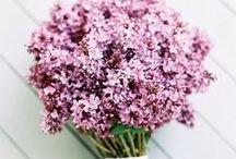 flowers / i love flowers!