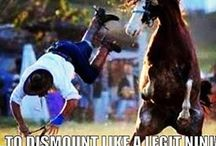 Horse Funnies..:P / Horsey things that make me laugh! / by Sierra Mortensen