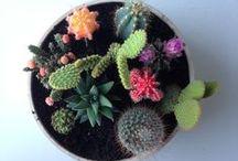 Plants & Cacti / my eternal love for succulents