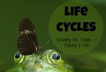 Latticed Learning: Life Cycles