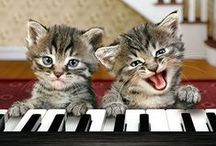 CAT- TASTIC!!! / This board needs no explanation. / by Linda McHardy