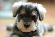 Bentley's / My favorite kind of dog.  / by Theresa Crenshaw