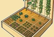 Gardening / by Sara