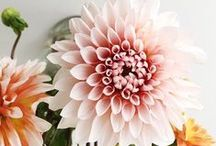 Flowers / Flowers in home