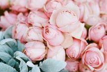 Feminine Things / feminine / girly / pink / gentle / soft / blush