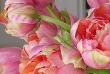 flowers / by Natasha Dennerstein