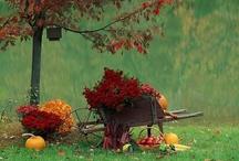 Autumn / by Cherrie Gray
