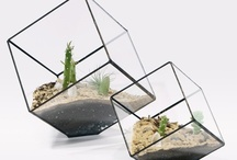 Terrariums / Inspiration for the terrarium building class put on by The Nest {www.thenestreno.com} & Sierra Water Gardens {www.sierrawatergardens.com}. Back by popular demand this Valentine's Day! / by Tessa Miller