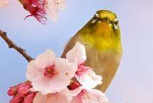 birds / the beauty of birds