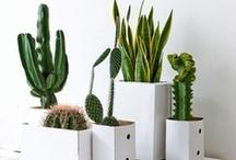 I want a cactus garden!