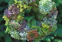 Gardens Inspiration