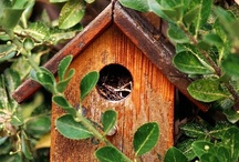 Bird House Goodness / by Kathy Westaby
