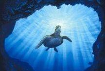 Aquatic Art / by Kathy Westaby