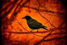 Blackbirds / by Kathy Westaby