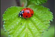 Lady Bugs Goodness