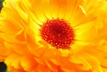 Yellow Gold Orange Goodness / by Kathy Westaby