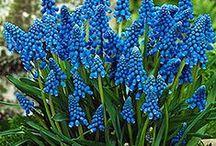 Home Gardening. / Lovely home gardens. Tips on planting flower and vegetable gardens.