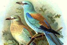 Birds ~ Vintage