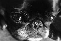 Too Cute / by Jamie Naylor