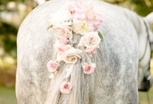 Horses / by Lise Sue Wachtman Delawder