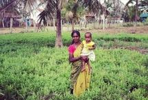 Honest Tea in India & Sri Lanka