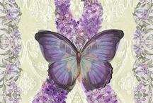 Fibromyalgia & R.A. / by Lise Sue Wachtman Delawder