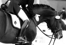 #Equestrian / For my future life after college...DRESSAGE! / by Marcy Levatino